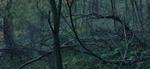 Michael Lange: WALD | Landscapes of Memory #3176