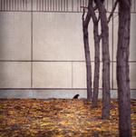 Michael Matsil: Trees, Leaves, Bird, Wall, 1997