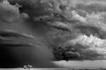 Mitch Dobrowner: Trees-Clouds