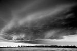 Mitch Dobrowner: Ship-Trees