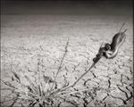 Nick Brandt: Snake on Lake Bed, Amboseli, 2012