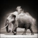 Nick Brandt: Elephant With Exploding Dust, Amboseli, 2004