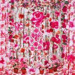 Patty Carroll: Rosy