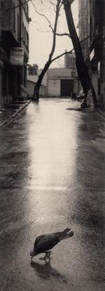 Pentti Sammallahti: Istanbul, Turkey, 1996