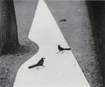 Pentti Sammallahti: Houston, Texas, 1998