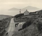 Pentti Sammallahti: Coumeenoole, Ireland, 1978