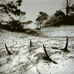 Peter Merts: Rusted Barrel, 2003