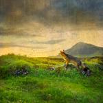 Tom Chambers: Nesting Time