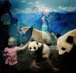 Traer Scott: Pandas, 2010