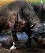Traer Scott: Water Buffalo