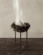 Zoë Zimmerman: Nest